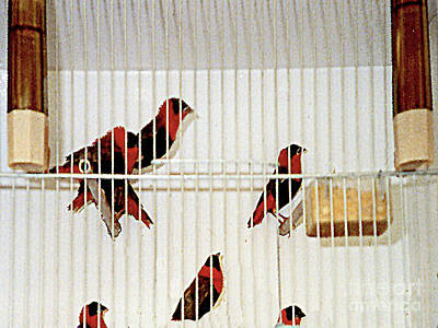 Photograph - Colorful Birds For Sale In A Street In Milan, Italy by Merton Allen