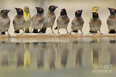 Photograph - Colorful Birds From Africa - Water And Its Beauty by Hermanus A Alberts