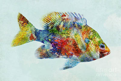 Mixed Media - Colorful Bluegill Art by Olga Hamilton