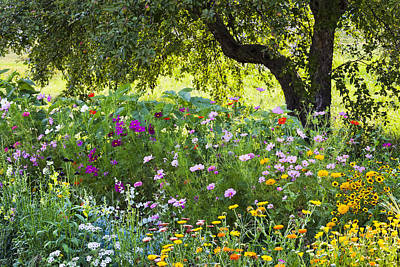 Photograph - Colorful Border Garden by Alan L Graham