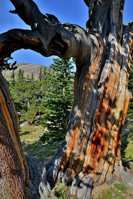 Photograph - Colorful Bristlecone Pine Frames Mt. Goliath by Ray Mathis
