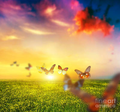 Square Photograph - Colorful Butterflies Flying Over Spring Meadow With Flowers by Michal Bednarek