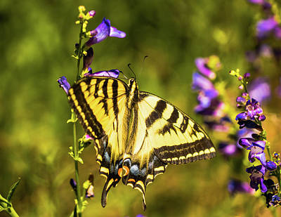 Photograph - Colorful Butterfly Bryce Canyon Utah by Lawrence S Richardson Jr