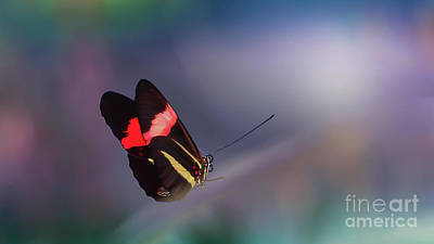 Photograph - colorful Butterfly by Franziskus Pfleghart