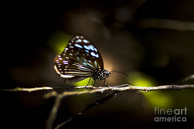 Photograph - Colorful Butterfly On Twig by Jorgo Photography - Wall Art Gallery