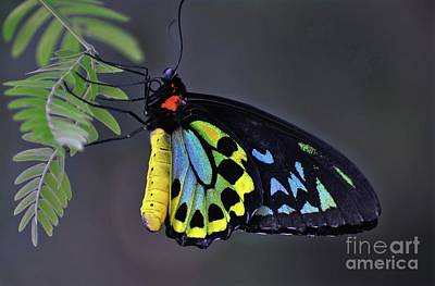 Photograph - Colorful Butterfly by Savannah Gibbs