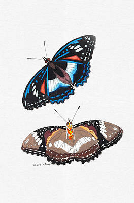 Mixed Media - Colorful Butterfly Wall Art - Cramerian Butterfly by Wall Art Prints