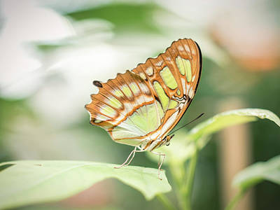 Photograph - Colorful Butterly Wings Of Vibrant Grean And Orange by Open Range
