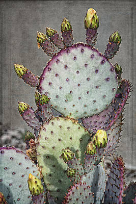 Photograph - Colorful Cactus A by Theo O'Connor