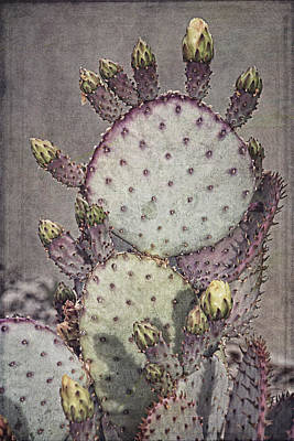Photograph - Colorful Cactus B by Theo O'Connor
