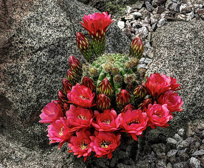 Pastel - Colorful Cactus by Richard Stephen