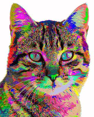 Painting - Colorful Cat by Samuel Majcen