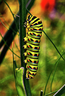 Photograph - Colorful Caterpillar 005 by George Bostian