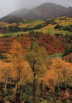 Photograph - Colorful Clash In The Elk Mountains by Dan Sproul