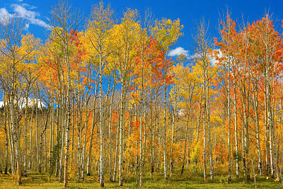 Red Photograph - Colorful Colorado Autumn Landscape by James BO  Insogna