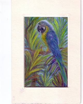 Macaw Drawing - Colorful Conversationalist by Regina Taormino