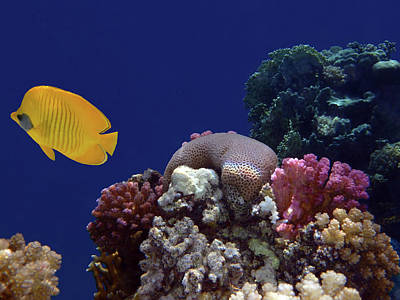 Colorful Coralreef Art Print