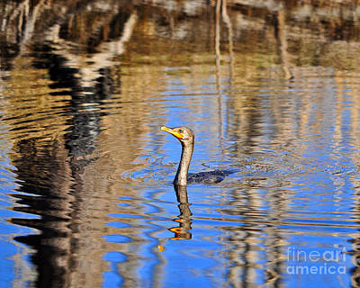 Art Print featuring the photograph Colorful Cormorant by Al Powell Photography USA