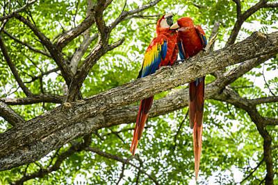 Bird Photograph - Colorful Couple by Oscar Gutierrez