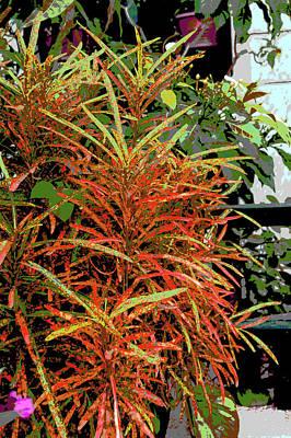 Photograph - Colorful Croton by Usha Shantharam
