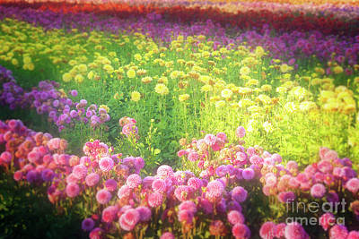 Photograph - Colorful Dahlia Field by Jim And Emily Bush