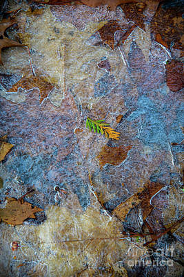 Photograph - Colorful December by Alana Ranney