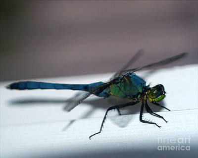 Photograph - Colorful Dragon by Clayton Bruster