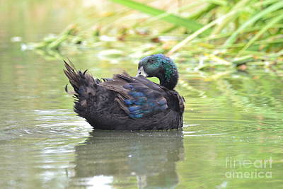 Photograph - Colorful Duck by Laurianna Taylor