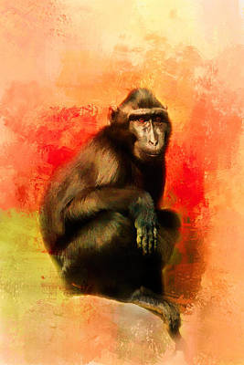 Photograph - Colorful Expressions Black Monkey by Jai Johnson
