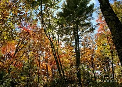 Photograph - Colorful Fall Canopy by Kenny Glotfelty