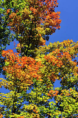 Photograph - Colorful Fall Foliage by Christina Rollo
