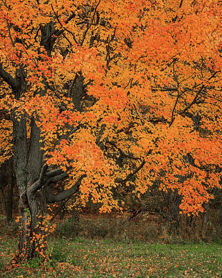 Photograph - Colorful Fall Tree by Joni Eskridge