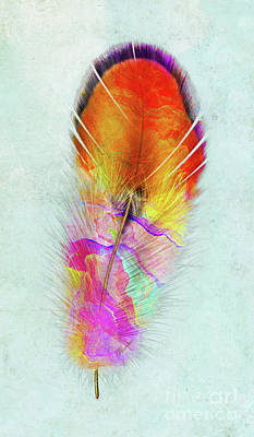 Mixed Media - Colorful Feather Art by Olga Hamilton