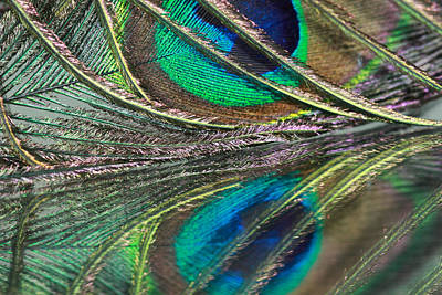 Photograph - Colorful Feather Strands by Angela Murdock