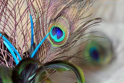 Photograph - Colorful Feathers by Angela Murdock