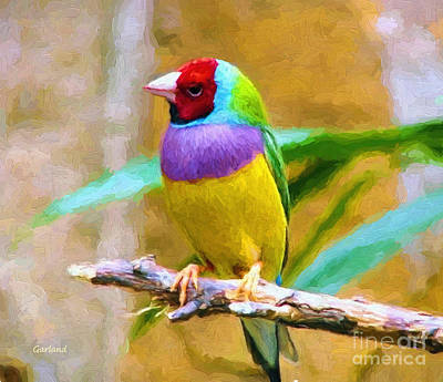 Colorful Finch Impasto Style Art Print by Garland Johnson