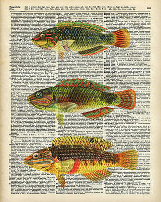Colorful Fishes Art Print
