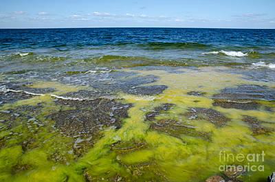 Photograph - Colorful Flat Rock Coast by Kennerth and Birgitta Kullman
