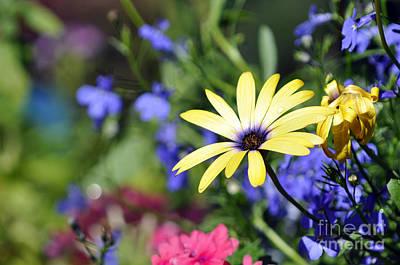 Colorful Flowers Art Print
