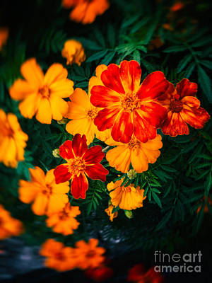 Print featuring the photograph Colorful Flowers by Silvia Ganora