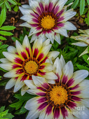 Photograph - Colorful Flowers by Tony Baca