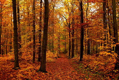 Ambition Photograph - Colorful Forest by Heike Hultsch