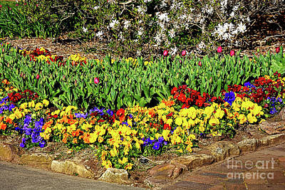 Photograph - Colorful Garden 2 By Kaye Menner by Kaye Menner