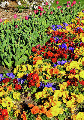 Photograph - Colorful Garden 3 By Kaye Menner by Kaye Menner