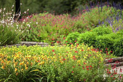 Photograph - Colorful Garden by Iris Greenwell