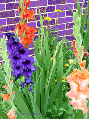 Colorful Gladiolas Art Print