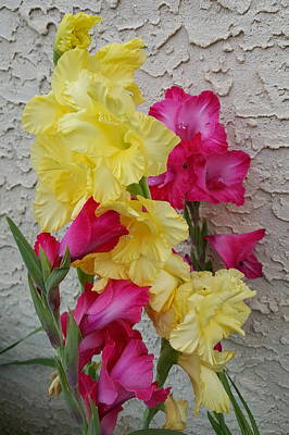 Gladiolus Photograph - Colorful Glads by Tammy Finnegan