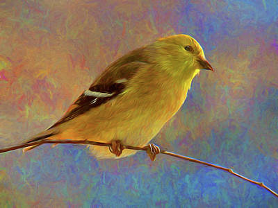 Colorful Goldfinch - Digital Painting Print by Mitch Spence