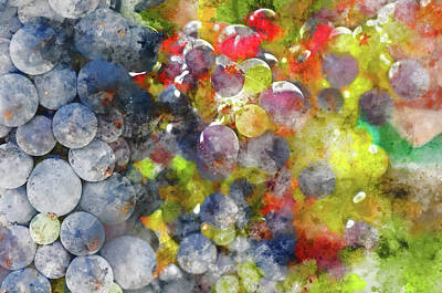 Photograph - Colorful Grapes On The Vine Close Up by Brandon Bourdages