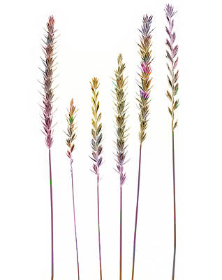 Digital Art - Colorful Grasses  by Sandra Foster